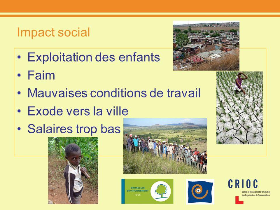 Impact social Exploitation des enfants Faim Mauvaises conditions de travail Exode vers la ville Salaires trop bas