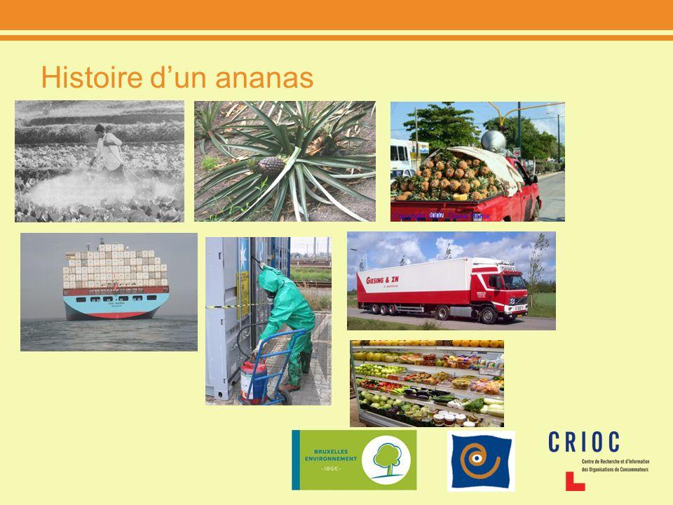 Histoire dun ananas