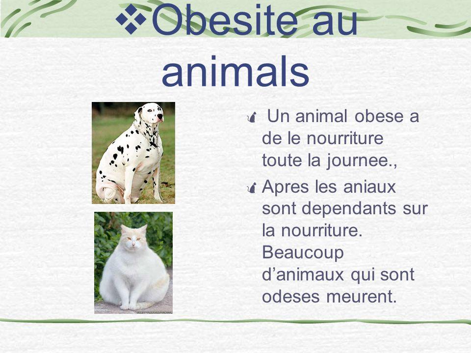 Obesite au animals Un animal obese a de le nourriture toute la journee., Apres les aniaux sont dependants sur la nourriture.