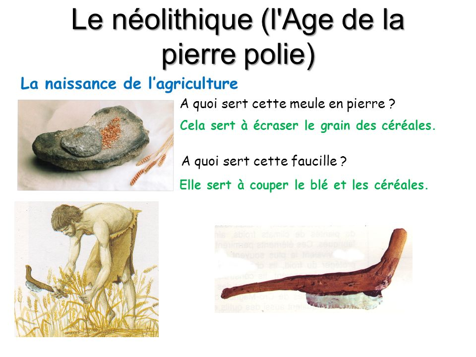 Le néolithique (l'Age de la pierre polie) La naissance de lagriculture A quoi sert cette meule en pierre ? Cela sert à écraser le grain des céréales.