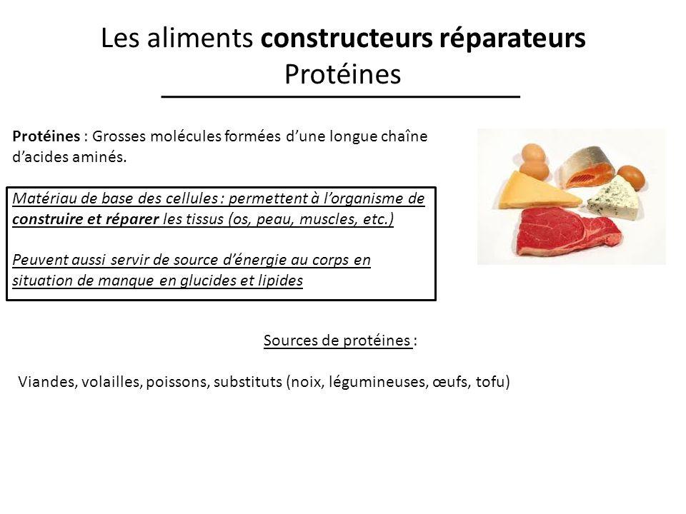 Les aliments constructeurs réparateurs Protéines Protéines : Grosses molécules formées dune longue chaîne dacides aminés. Matériau de base des cellule