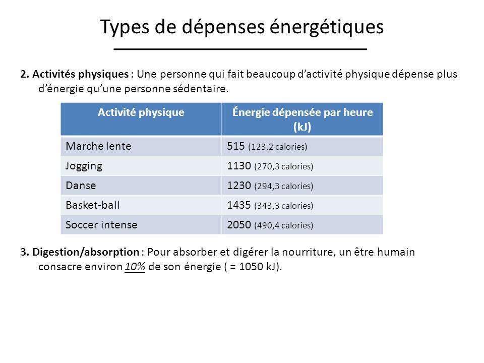 Types de dépenses énergétiques 2. Activités physiques : Une personne qui fait beaucoup dactivité physique dépense plus dénergie quune personne sédenta