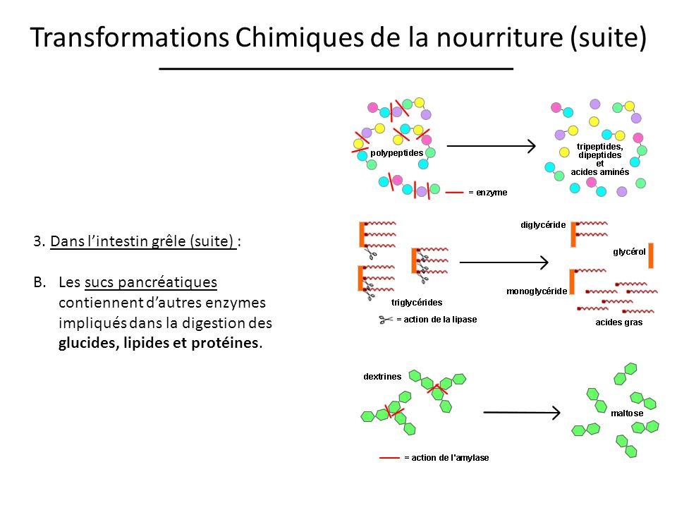 Transformations Chimiques de la nourriture (suite) 3. Dans lintestin grêle (suite) : B.Les sucs pancréatiques contiennent dautres enzymes impliqués da
