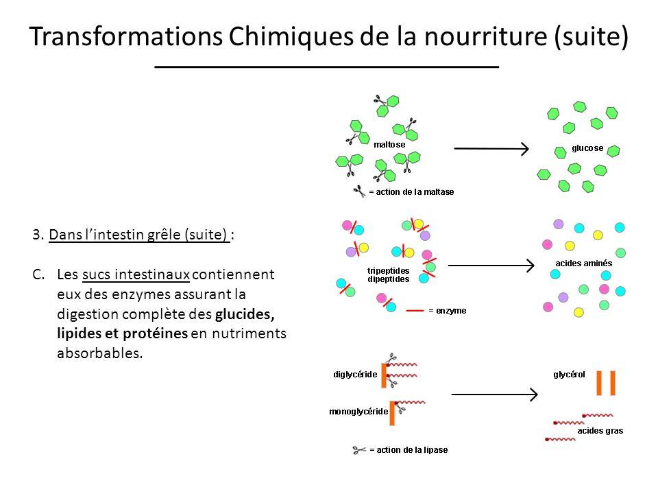 Transformations Chimiques de la nourriture (suite) 3. Dans lintestin grêle (suite) : C.Les sucs intestinaux contiennent eux des enzymes assurant la di