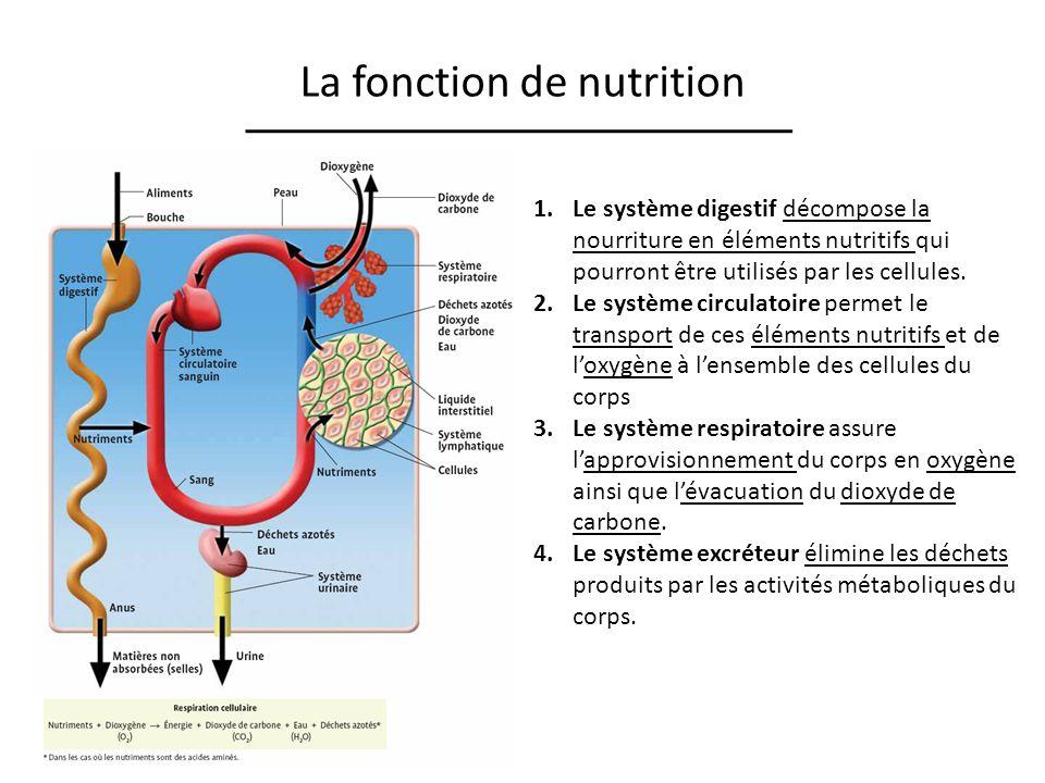 La fonction de nutrition 1.Le système digestif décompose la nourriture en éléments nutritifs qui pourront être utilisés par les cellules. 2.Le système