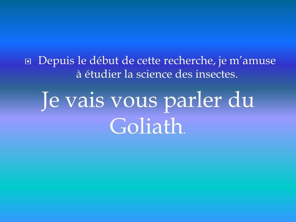 Compte tenu de leur taille, ces insectes ont reçu le nom du géant de la bible: Goliath.
