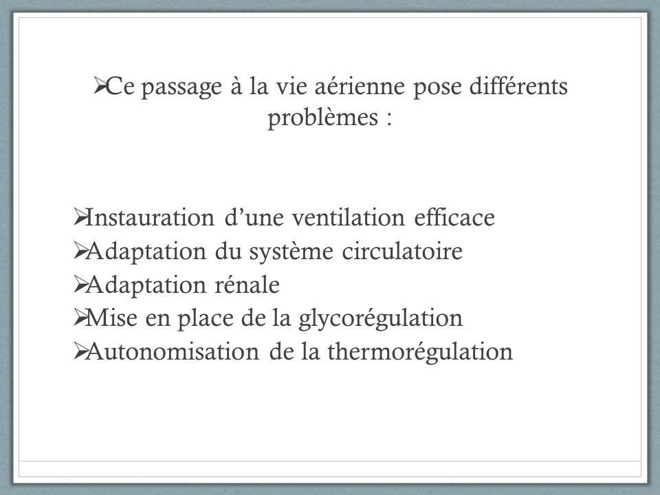Ce passage à la vie aérienne pose différents problèmes : Instauration dune ventilation efficace Adaptation du système circulatoire Adaptation rénale M