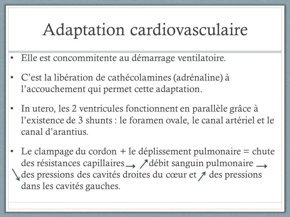 Adaptation cardiovasculaire Elle est concommitente au démarrage ventilatoire. Cest la libération de cathécolamines (adrénaline) à laccouchement qui pe