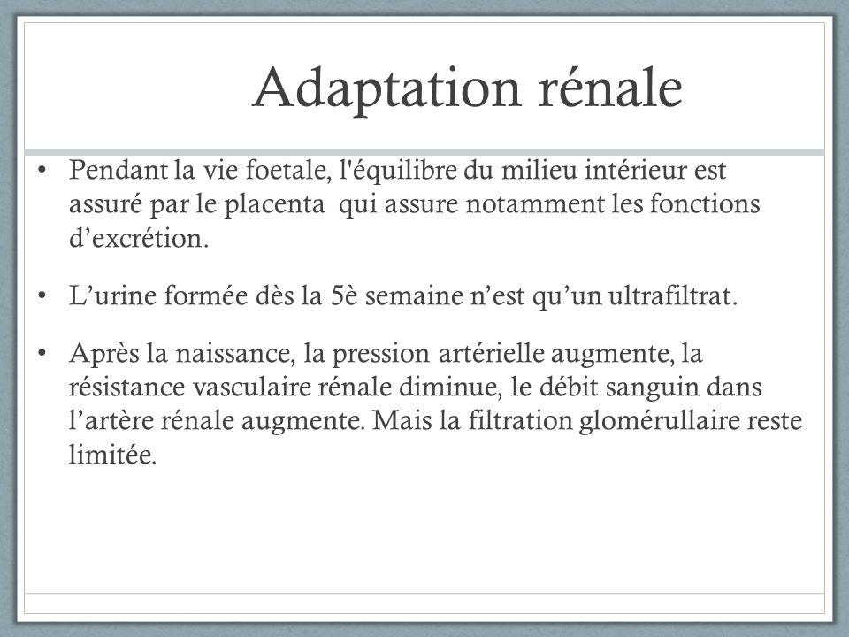 Adaptation rénale Pendant la vie foetale, l'équilibre du milieu intérieur est assuré par le placenta qui assure notamment les fonctions dexcrétion. Lu