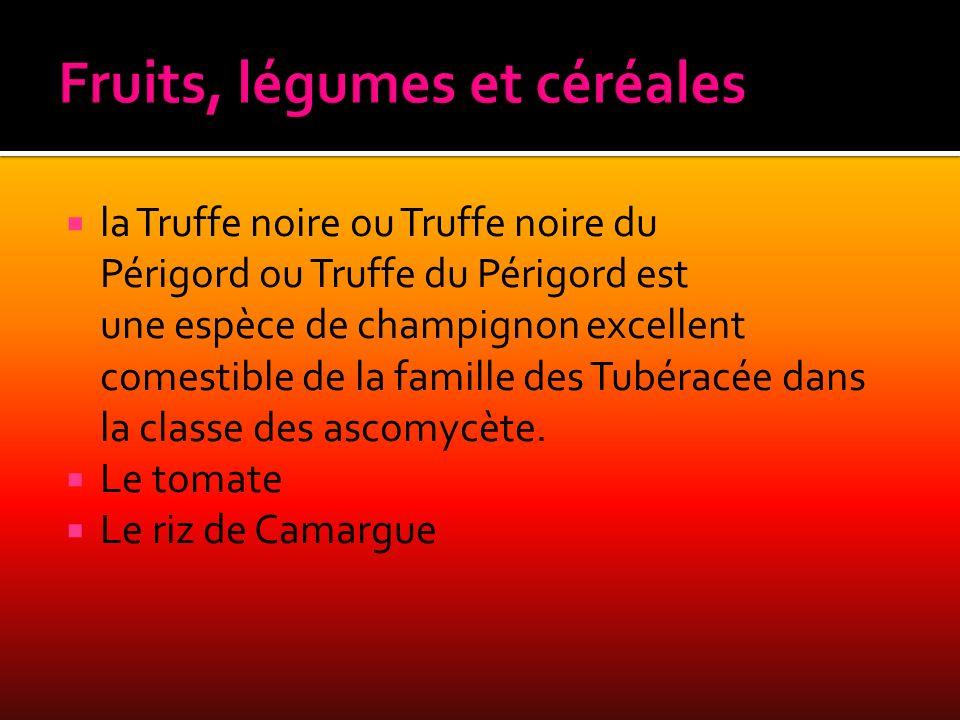 la Truffe noire ou Truffe noire du Périgord ou Truffe du Périgord est une espèce de champignon excellent comestible de la famille des Tubéracée dans l