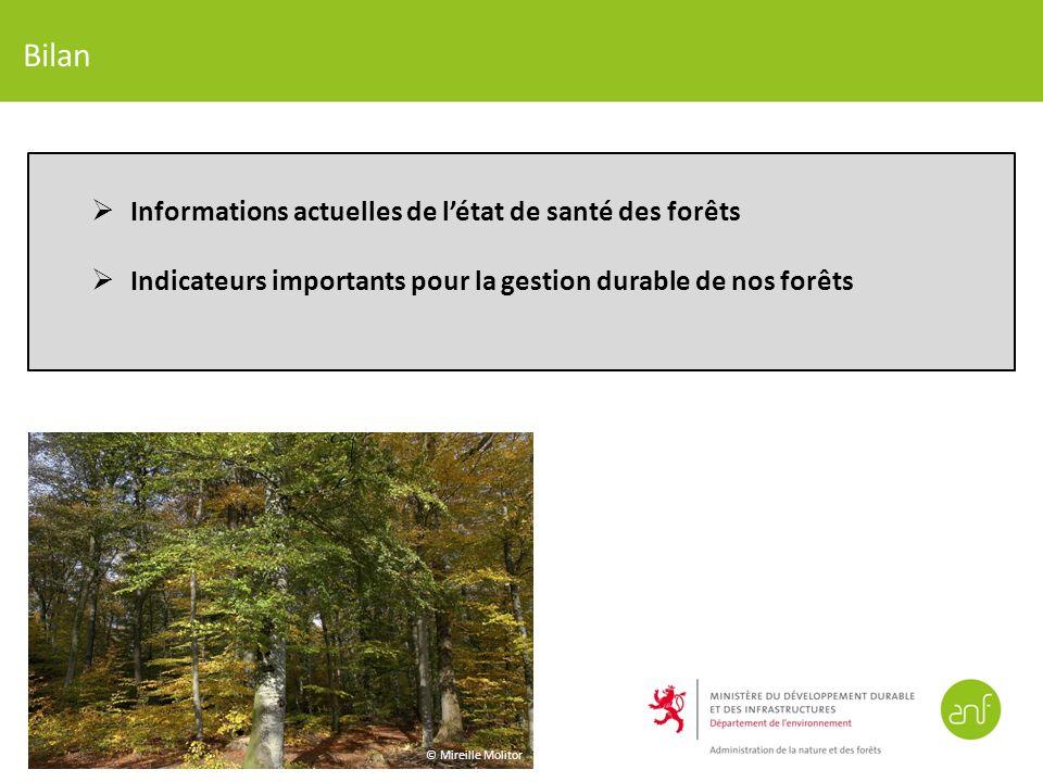Bilan Informations actuelles de létat de santé des forêts Indicateurs importants pour la gestion durable de nos forêts © Mireille Molitor
