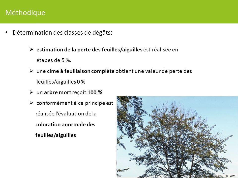 Méthodique Détermination des classes de dégâts: estimation de la perte des feuilles/aiguilles est réalisée en étapes de 5 %.