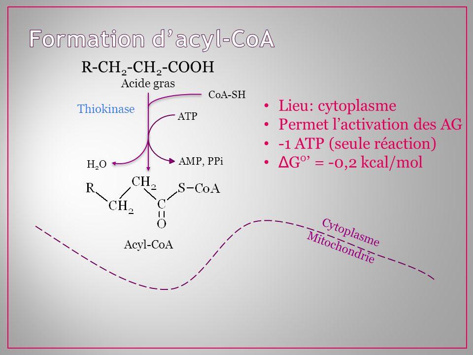 Mitochondrie Cytoplasme R-CH 2 -CH 2 -COOH Acide gras ATP AMP, PPi CoA-SH H2OH2O Thiokinase Acyl-CoA Lieu: cytoplasme Permet lactivation des AG -1 ATP