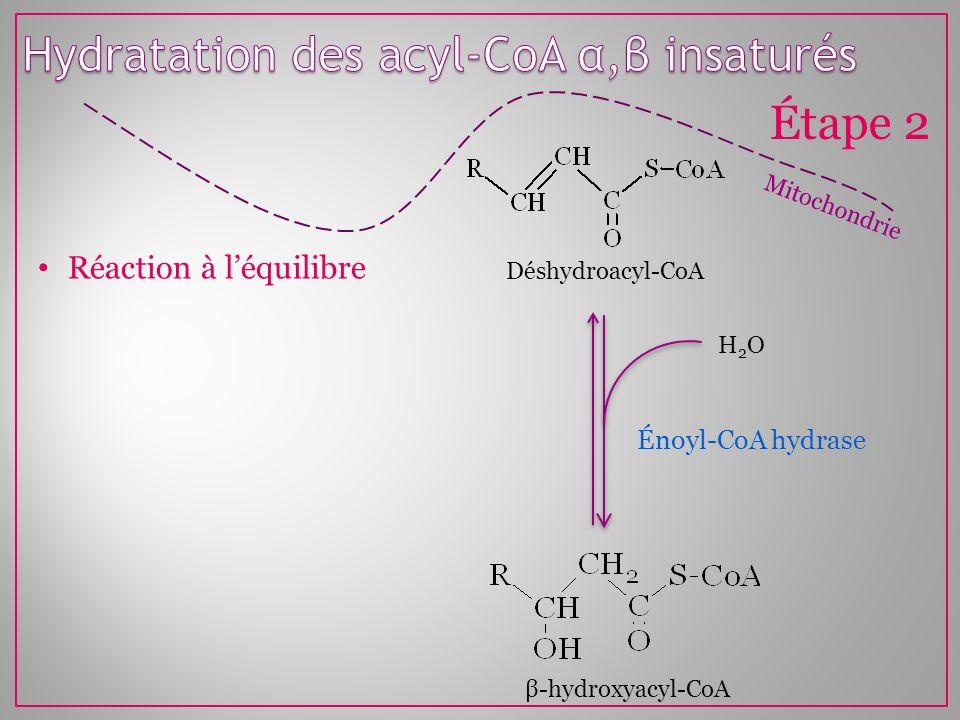 Mitochondrie Étape 2 Énoyl-CoA hydrase H2OH2O Déshydroacyl-CoA β-hydroxyacyl-CoA Réaction à léquilibre