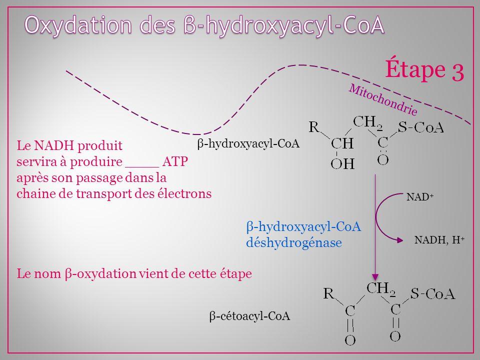 Mitochondrie Étape 3 β-hydroxyacyl-CoA déshydrogénase β-hydroxyacyl-CoA NAD + NADH, H + β-cétoacyl-CoA Le NADH produit servira à produire ____ ATP apr