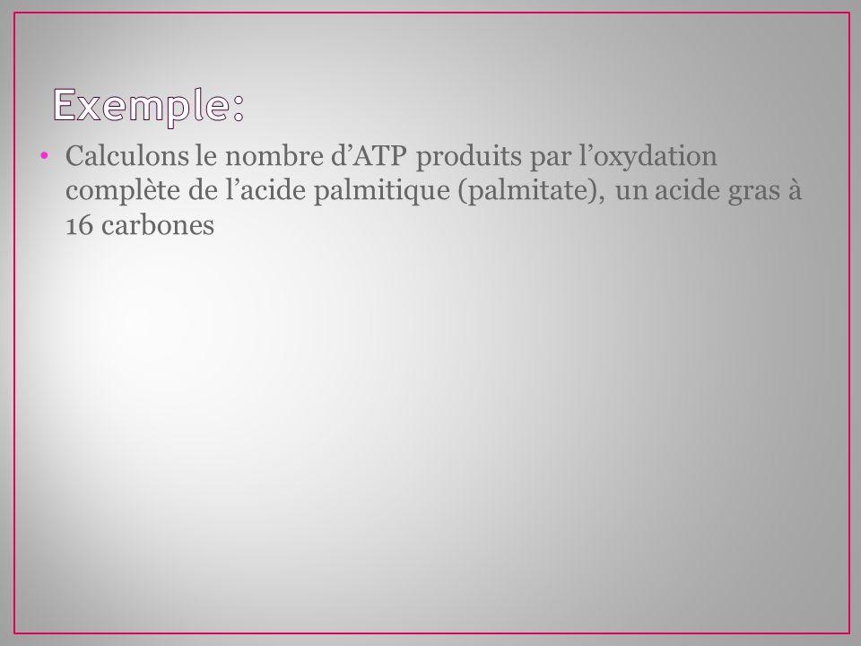 Calculons le nombre dATP produits par loxydation complète de lacide palmitique (palmitate), un acide gras à 16 carbones