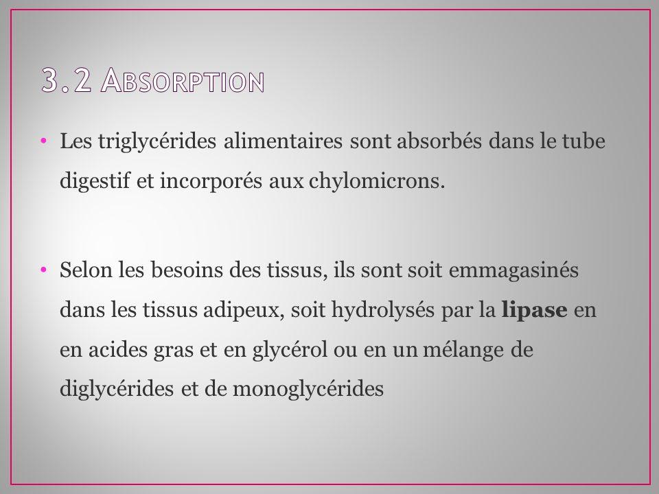 Les triglycérides alimentaires sont absorbés dans le tube digestif et incorporés aux chylomicrons. Selon les besoins des tissus, ils sont soit emmagas