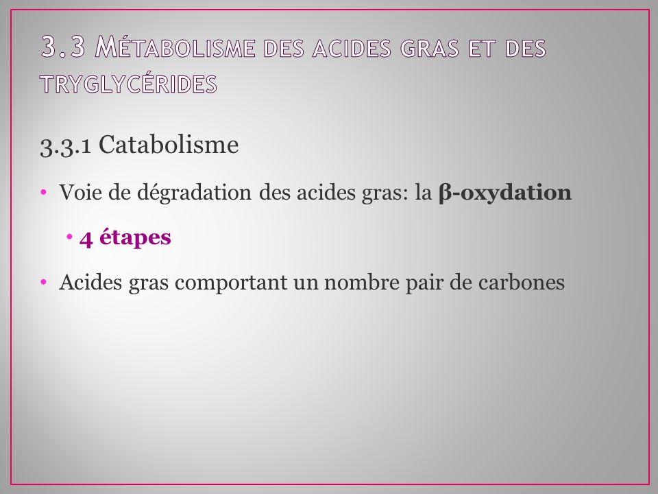 3.3.1 Catabolisme Voie de dégradation des acides gras: la β-oxydation 4 étapes Acides gras comportant un nombre pair de carbones