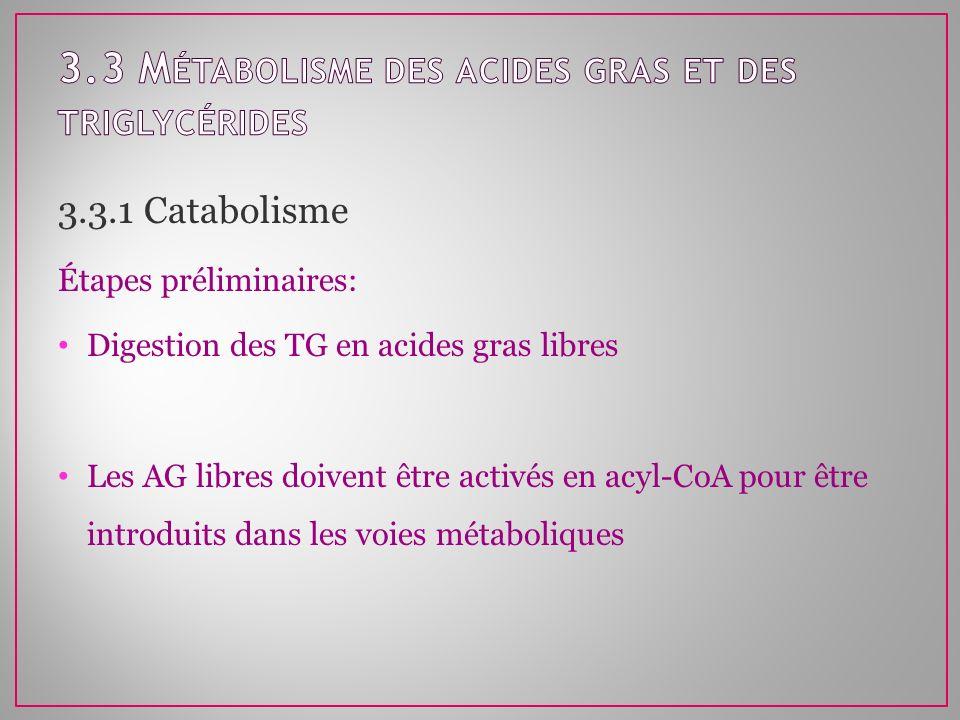 3.3.1 Catabolisme Étapes préliminaires: Digestion des TG en acides gras libres Les AG libres doivent être activés en acyl-CoA pour être introduits dan