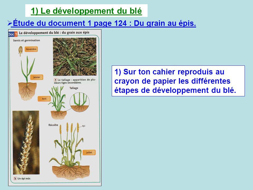 1) Le développement du blé Étude du document 1 page 124 : Du grain au épis. 1) Sur ton cahier reproduis au crayon de papier les différentes étapes de