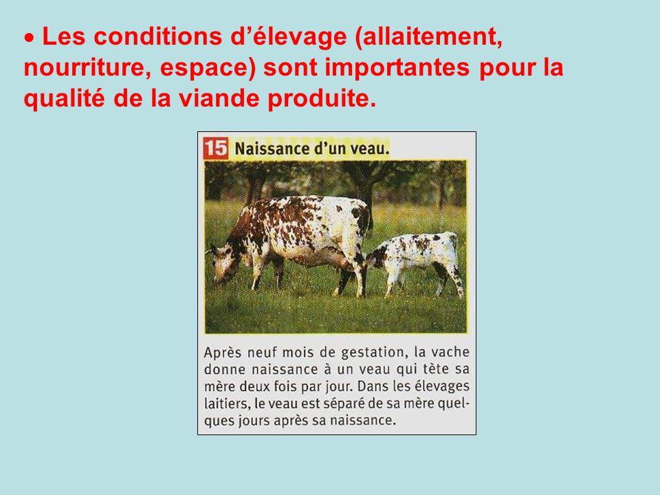 Les conditions délevage (allaitement, nourriture, espace) sont importantes pour la qualité de la viande produite.