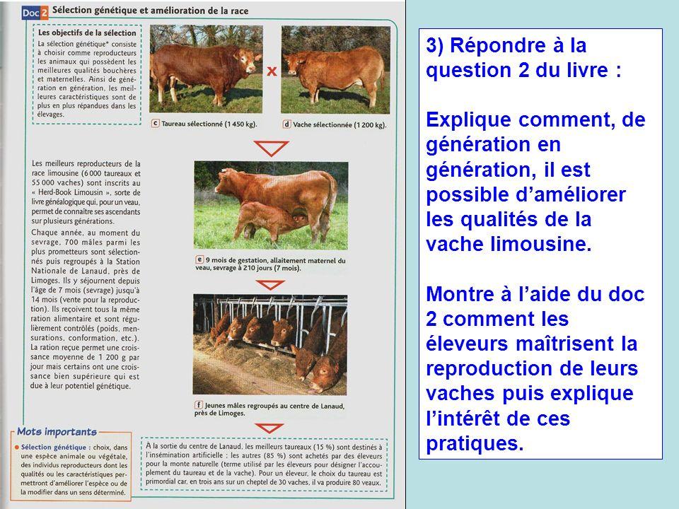 3) Répondre à la question 2 du livre : Explique comment, de génération en génération, il est possible daméliorer les qualités de la vache limousine. M