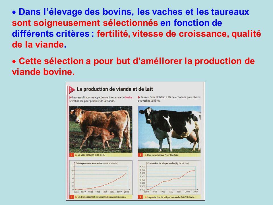 Dans lélevage des bovins, les vaches et les taureaux sont soigneusement sélectionnés en fonction de différents critères : fertilité, vitesse de croiss