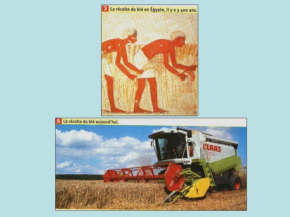 II) Un exemple de culture : le blé Question : Comment parvient-on à améliorer la production du blé ?