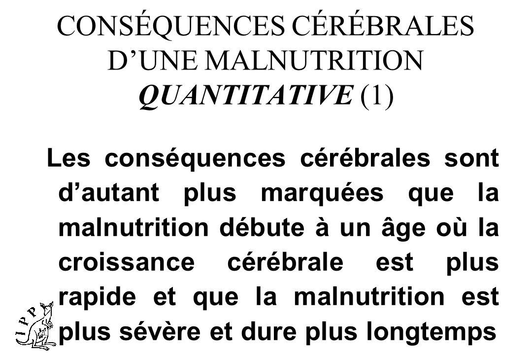 CONSÉQUENCES CÉRÉBRALES DUNE MALNUTRITION QUANTITATIVE (1) Les conséquences cérébrales sont dautant plus marquées que la malnutrition débute à un âge