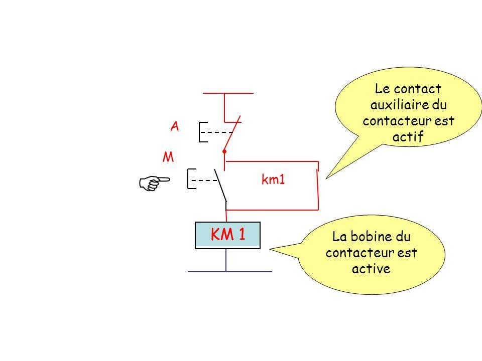 A M km1 KM 1 Le contact auxiliaire du contacteur est actif La bobine du contacteur est active