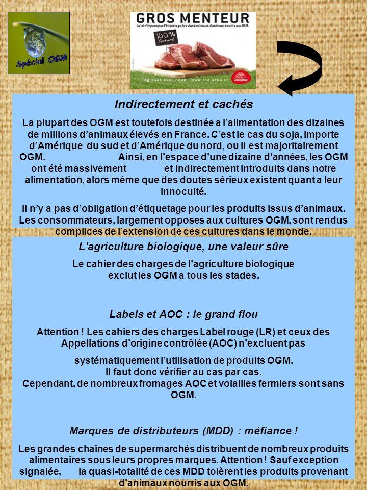 Indirectement et cachés La plupart des OGM est toutefois destinée a lalimentation des dizaines de millions danimaux élevés en France. Cest le cas du s