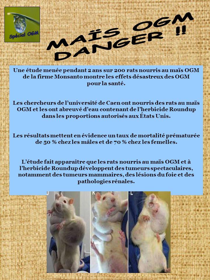 Une étude menée pendant 2 ans sur 200 rats nourris au maïs OGM de la firme Monsanto montre les effets désastreux des OGM pour la santé. Les chercheurs