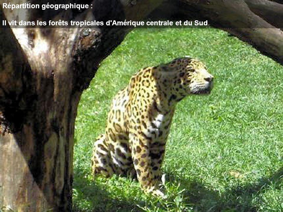 Répartition géographique : Il vit dans les forêts tropicales d'Amérique centrale et du Sud.
