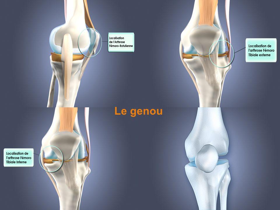 Le genou