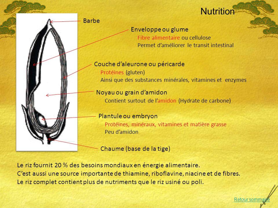 Nutrition Enveloppe ou glume Le riz fournit 20 % des besoins mondiaux en énergie alimentaire.