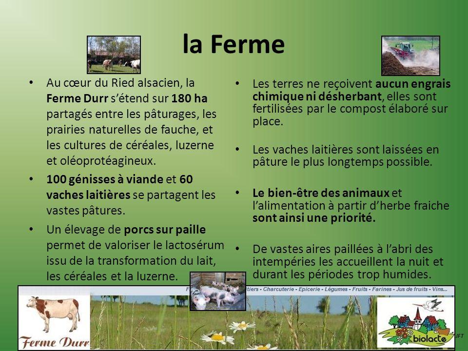 la Ferme Au cœur du Ried alsacien, la Ferme Durr sétend sur 180 ha partagés entre les pâturages, les prairies naturelles de fauche, et les cultures de