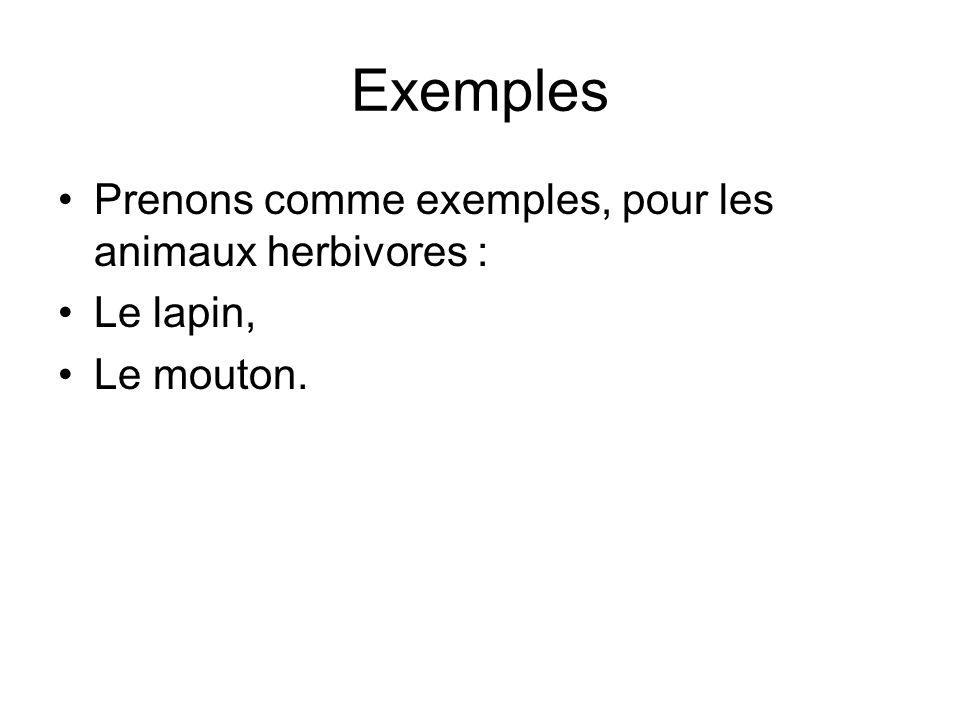 Exemples Prenons comme exemples, pour les animaux herbivores : Le lapin, Le mouton.