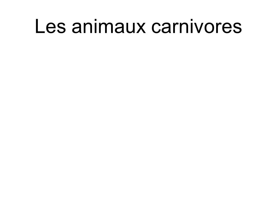 Les animaux carnivores