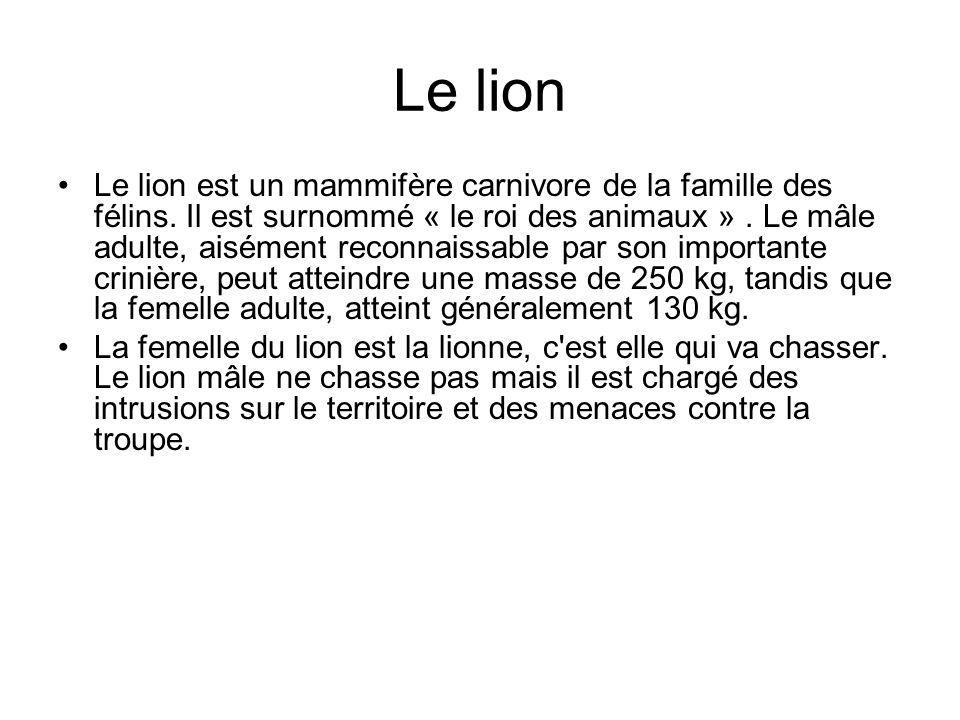 Le lion Le lion est un mammifère carnivore de la famille des félins. Il est surnommé « le roi des animaux ». Le mâle adulte, aisément reconnaissable p