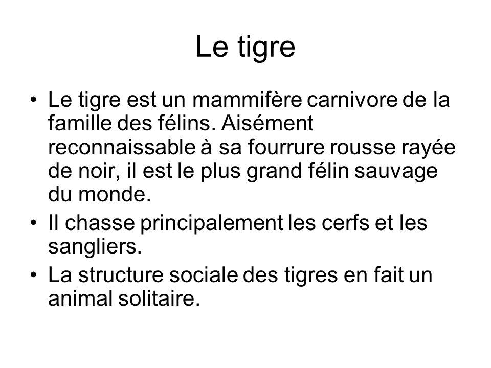 Le tigre Le tigre est un mammifère carnivore de la famille des félins. Aisément reconnaissable à sa fourrure rousse rayée de noir, il est le plus gran