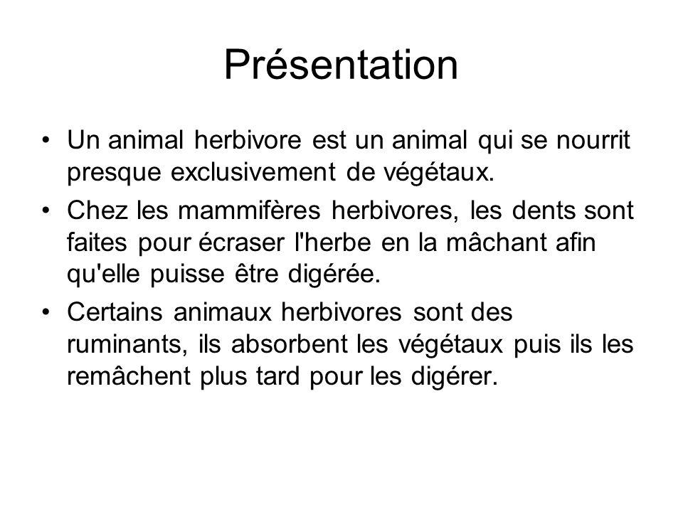 Présentation Un animal herbivore est un animal qui se nourrit presque exclusivement de végétaux. Chez les mammifères herbivores, les dents sont faites