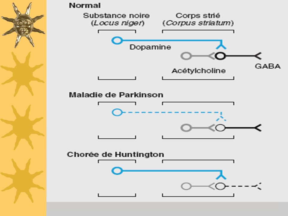 Physiopathologie de la maladie de parkinson 2-Autres voies non dopaminergiques : striatum et Locus Niger : sérotonine striatum vers Locus Coeruleus :