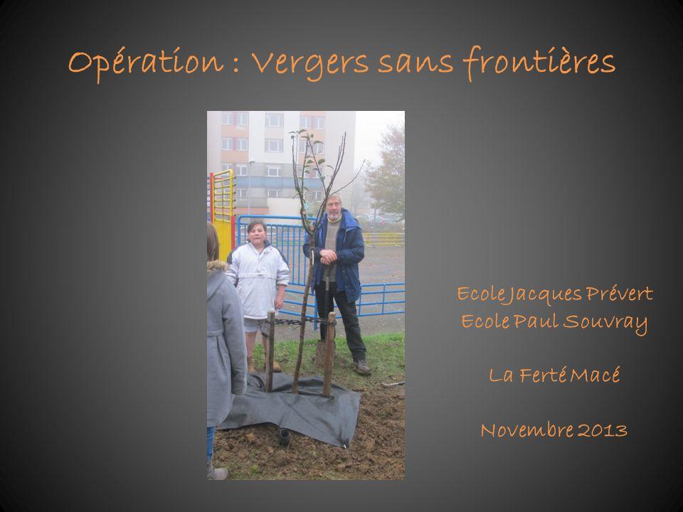 Opération : Vergers sans frontières Ecole Jacques Prévert Ecole Paul Souvray La Ferté Macé Novembre 2013