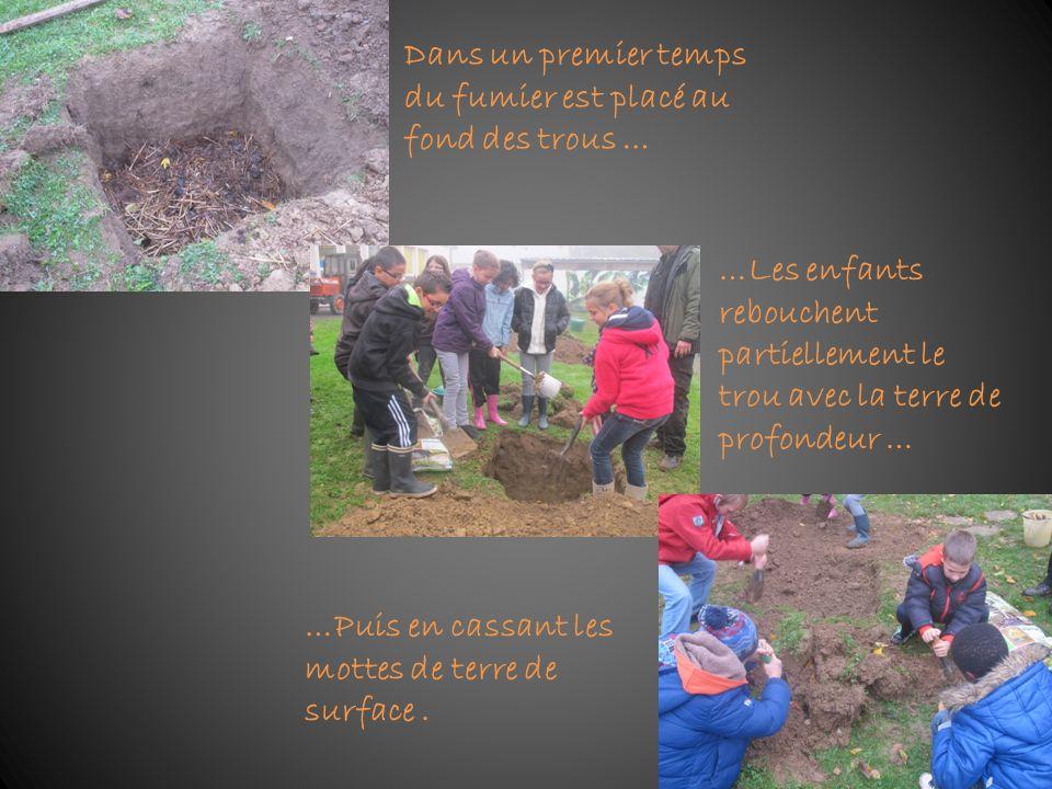 Dans un premier temps du fumier est placé au fond des trous … …Les enfants rebouchent partiellement le trou avec la terre de profondeur … …Puis en cas