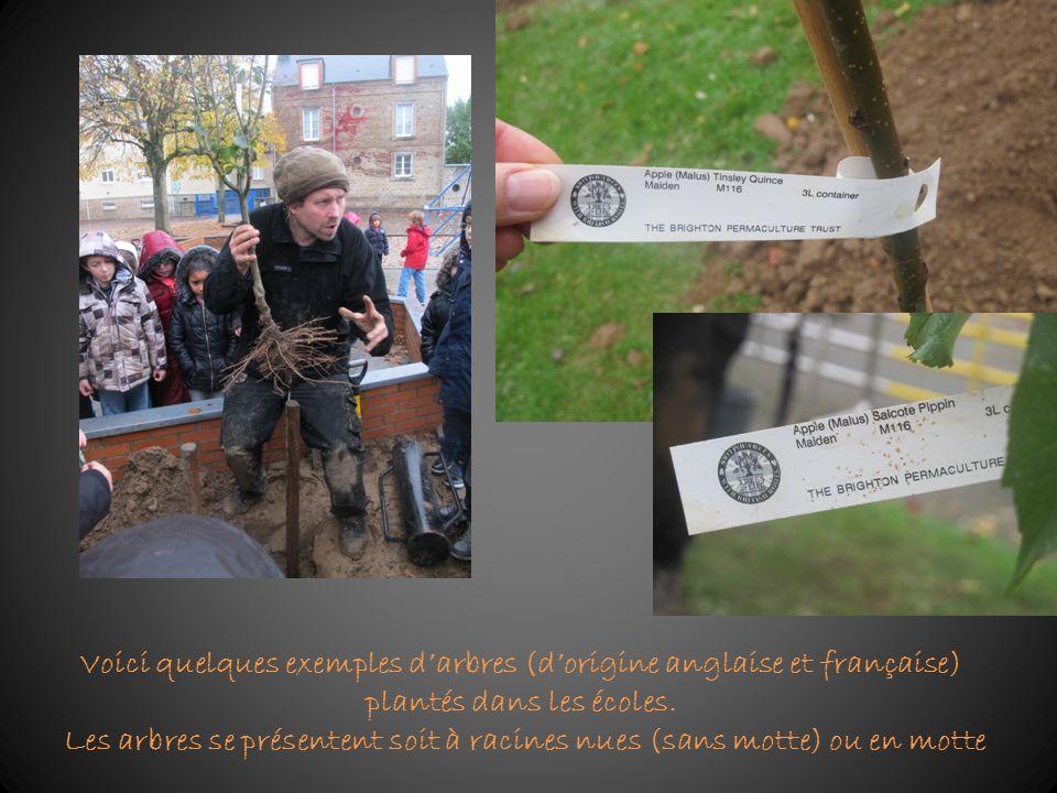 Voici quelques exemples darbres (dorigine anglaise et française) plantés dans les écoles. Les arbres se présentent soit à racines nues (sans motte) ou