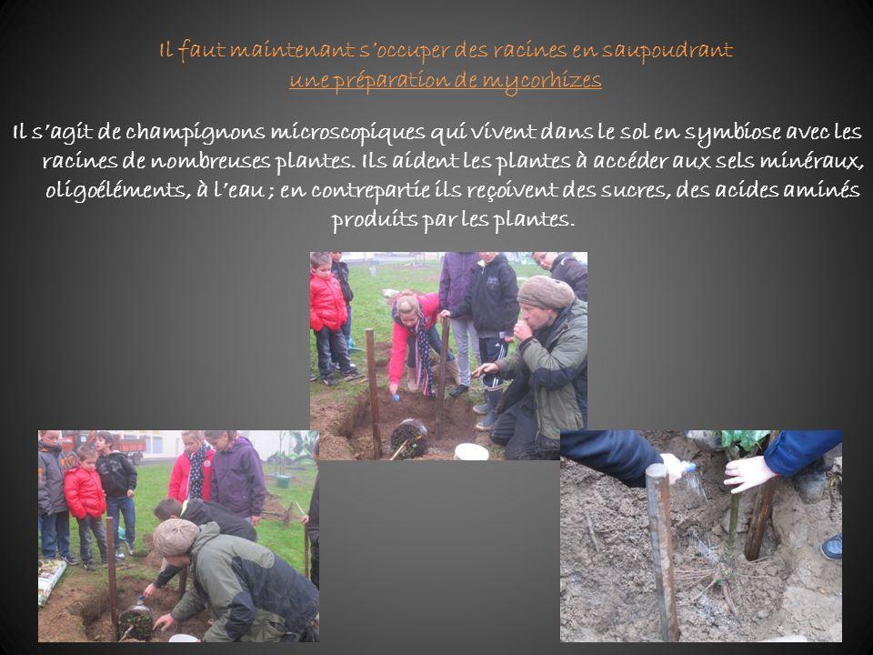 Il sagit de champignons microscopiques qui vivent dans le sol en symbiose avec les racines de nombreuses plantes. Ils aident les plantes à accéder aux