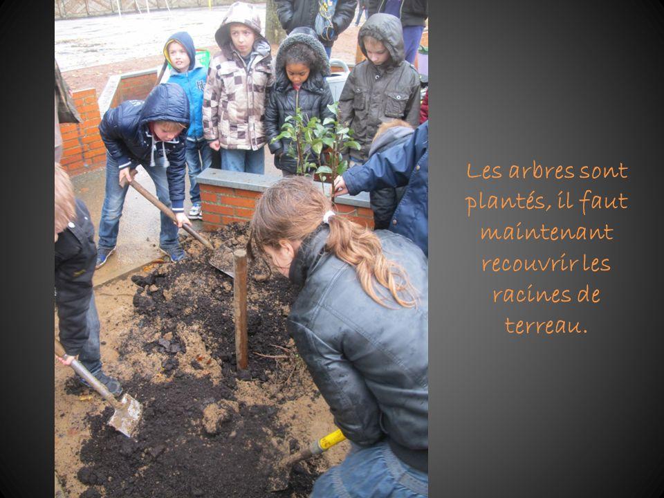Les arbres sont plantés, il faut maintenant recouvrir les racines de terreau.