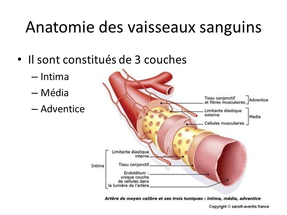 Anatomie des vaisseaux sanguins Il sont constitués de 3 couches – Intima – Média – Adventice