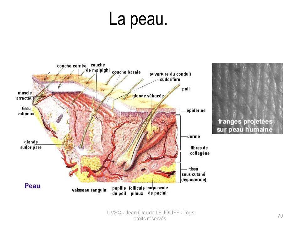 La peau. UVSQ - Jean Claude LE JOLIFF - Tous droits réservés. 70