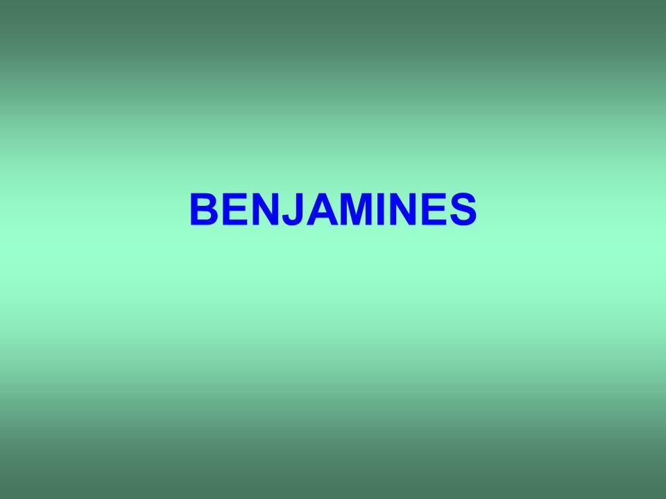 BENJAMINES